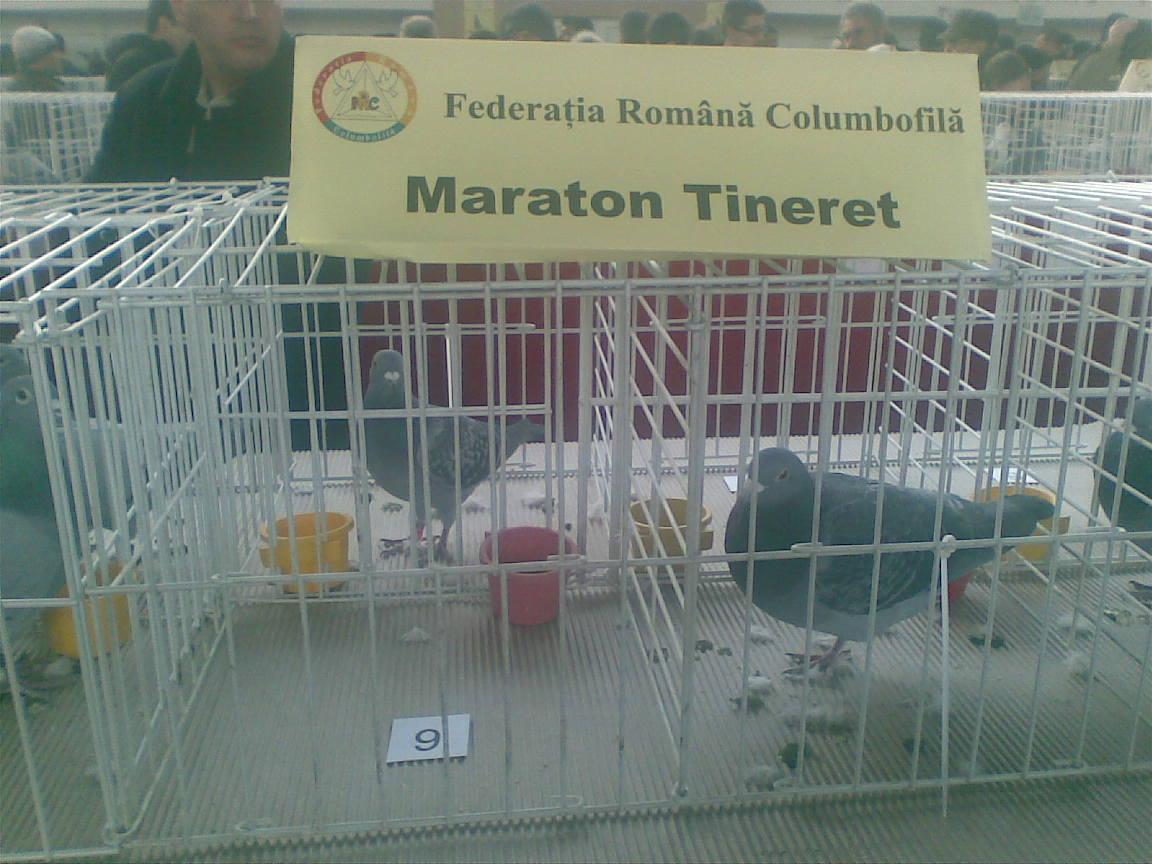 Maratonisti1.jpg